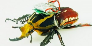 beetles-robots-ft-200x100-e1426290374763